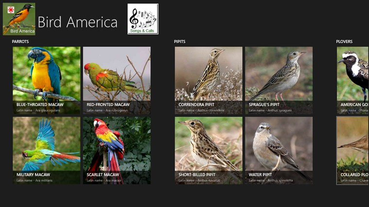 Bird America screen shot 0