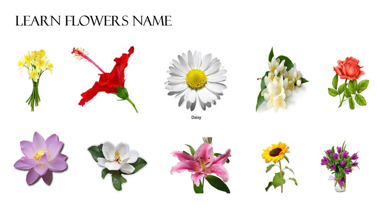 Flowers name and pictures