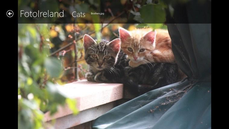 FotoIreland screen shot 4