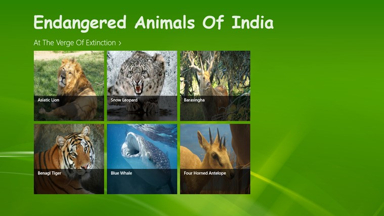 endangered animal thesis Endangered animals essay - quick and trustworthy writings from industry top agency #1 reliable and professional academic writing aid let us help with your bachelor thesis.