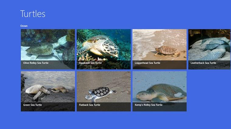 Turtles ekrano nuotrauka 0