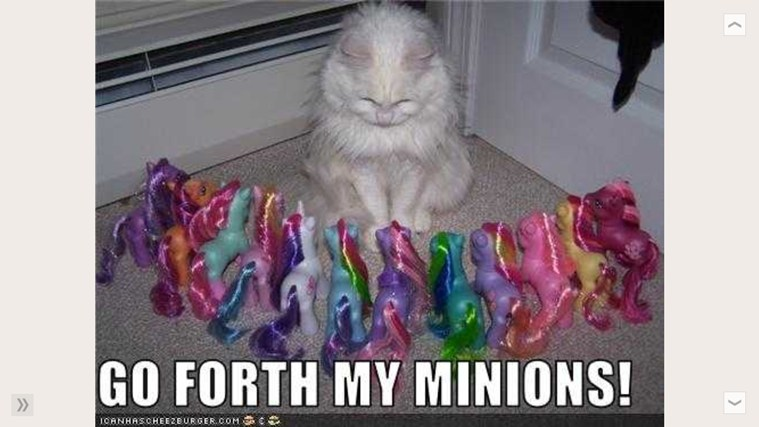 Funny Cat Pictures Daily screen shot 2