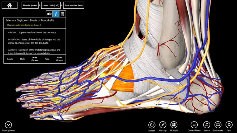 Essential Anatomy 3 screen shot 4