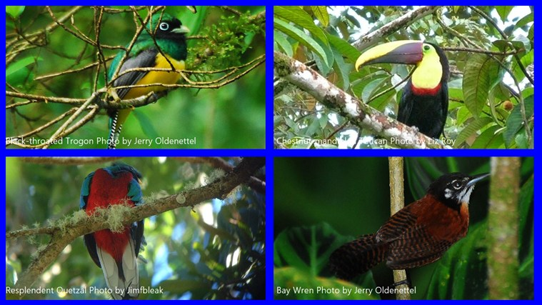 Birds of Costa Rica Picture Mosaic tangkapan skrin 0