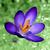 Icon.208664
